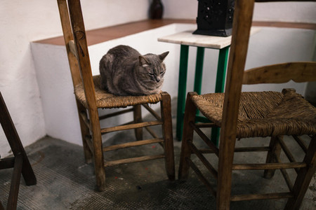 Cat on top of a vintage chair in typical andalusian courtyard in Cordoba  Andalusia Spain