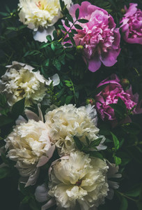 White and pink peony flowers over dark background  top view