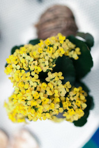Small yellow flowers bouquet in a playground