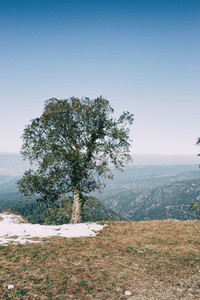 Landscape of an isolated tree with a little snow