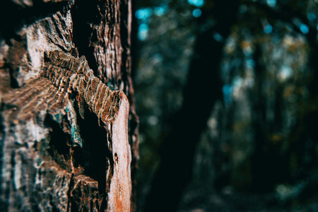 Close up of pine bark