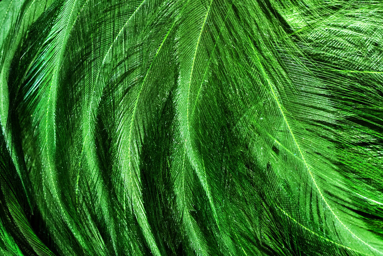Green Feather Swirl
