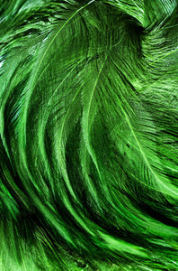 Green Feather Swirl