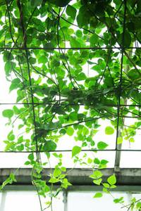 Greenhouse Foliage