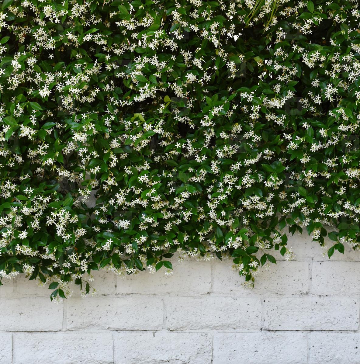 Photos Flower Wall 158617 Youworkforthem