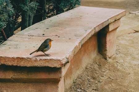 Close up of a small bird on a stone bench