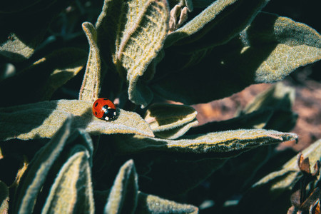 A small red ladybug on top of some leaves
