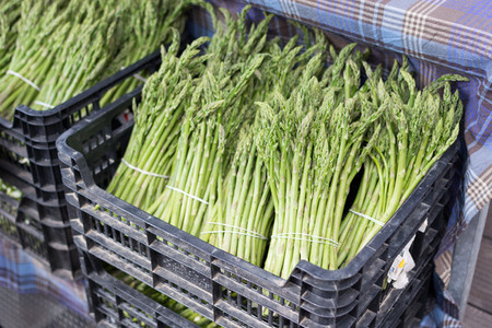 Neat bunches of fresh asparagus