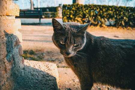 Stray gray cat