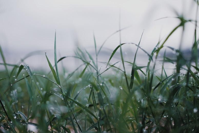 Fresh morning on a spring grass
