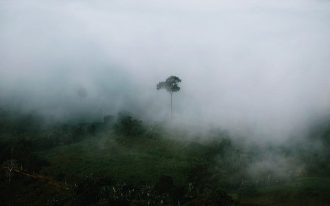 Misty mountain forest
