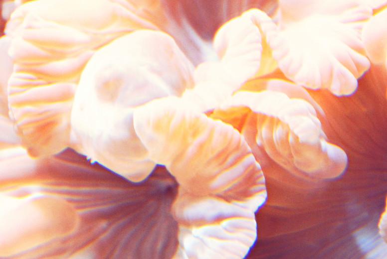 Peach Underwater Flower