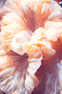 Peach Underwater Flower