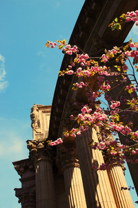 Bloom and Columns