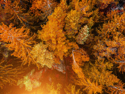 Top down aerial drone image of a forest