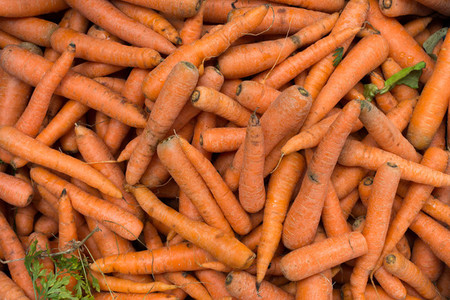 Harvested carrots at market