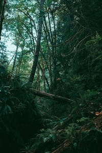 Green Forest 04