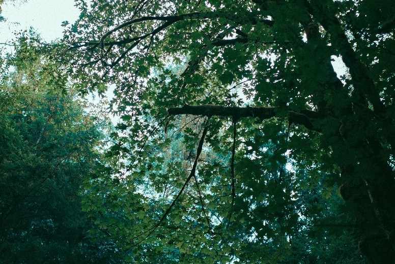 Green Forest 05