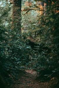 Green Forest 06