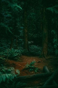 Green Forest 09