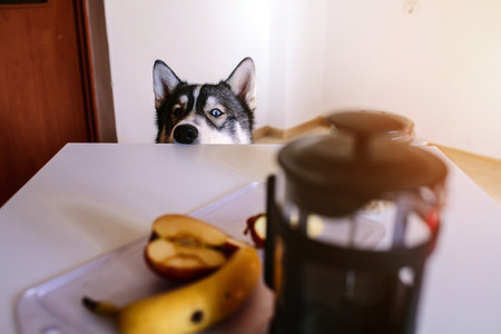 Dog waiting for food