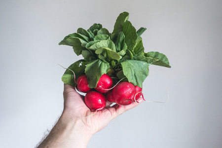 Red radish in hand