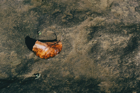 An autumn leaf lying on a stone