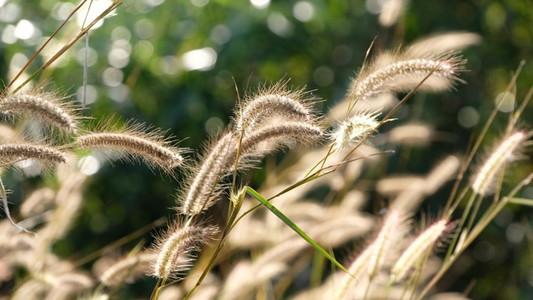 Grass161018