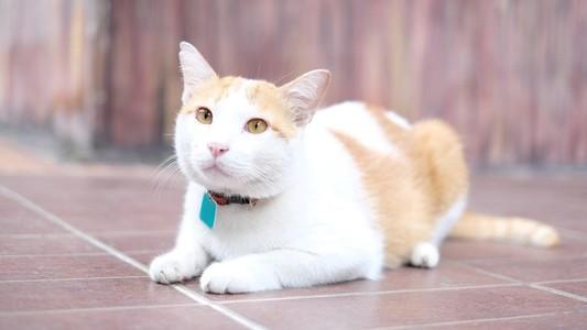 Cat 161077