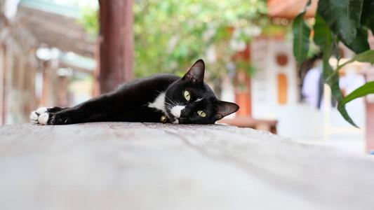 Cat 161103