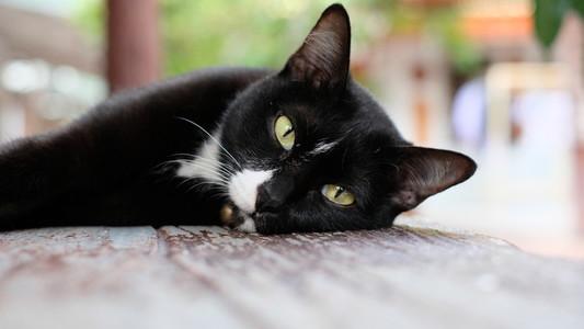Cat 161104