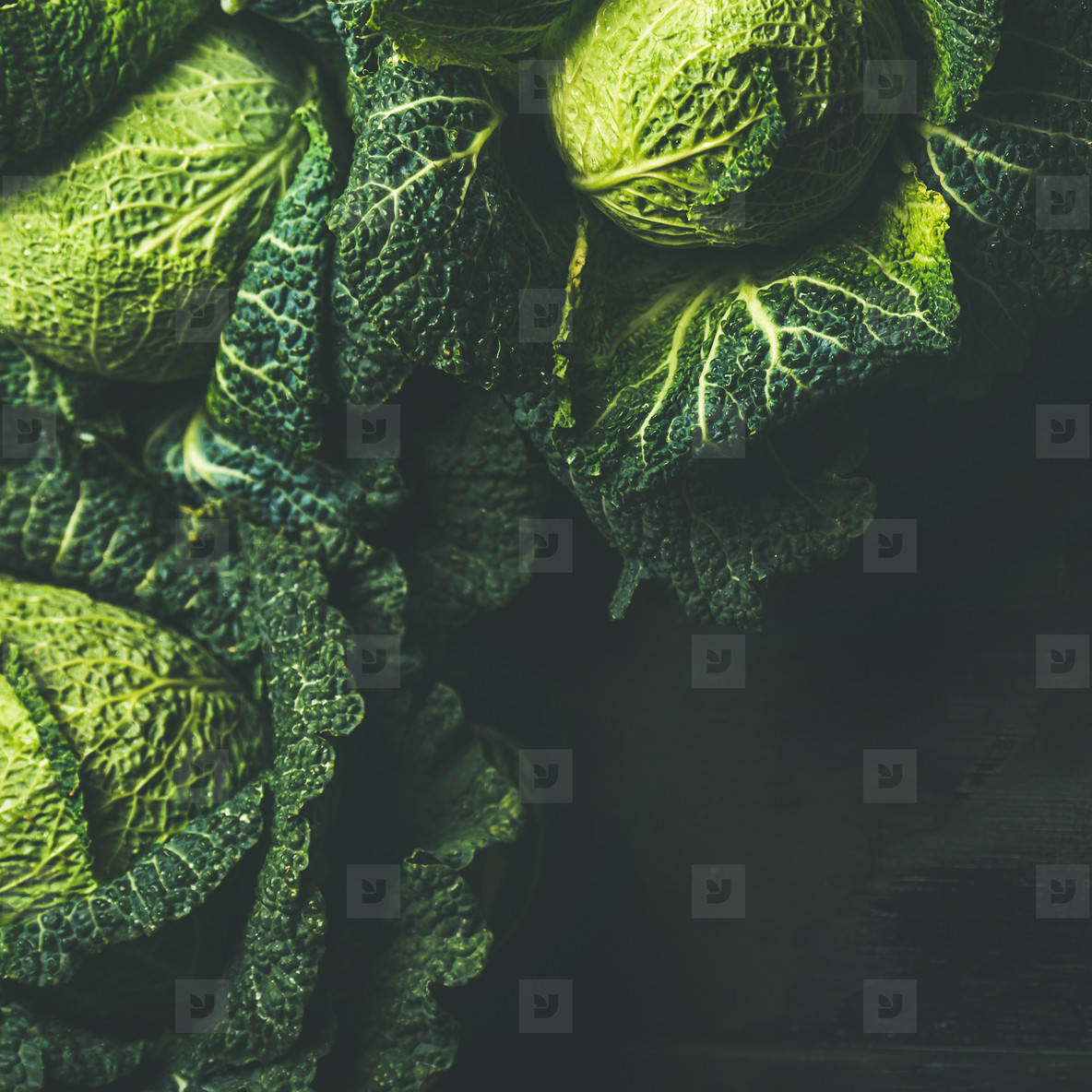 Raw fresh uncooked green cabbage  dark background  square crop