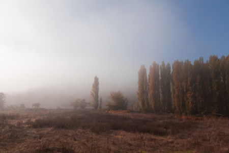 Autumn landscape with fog in the forest