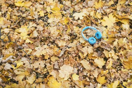 Autumn Leaves 07