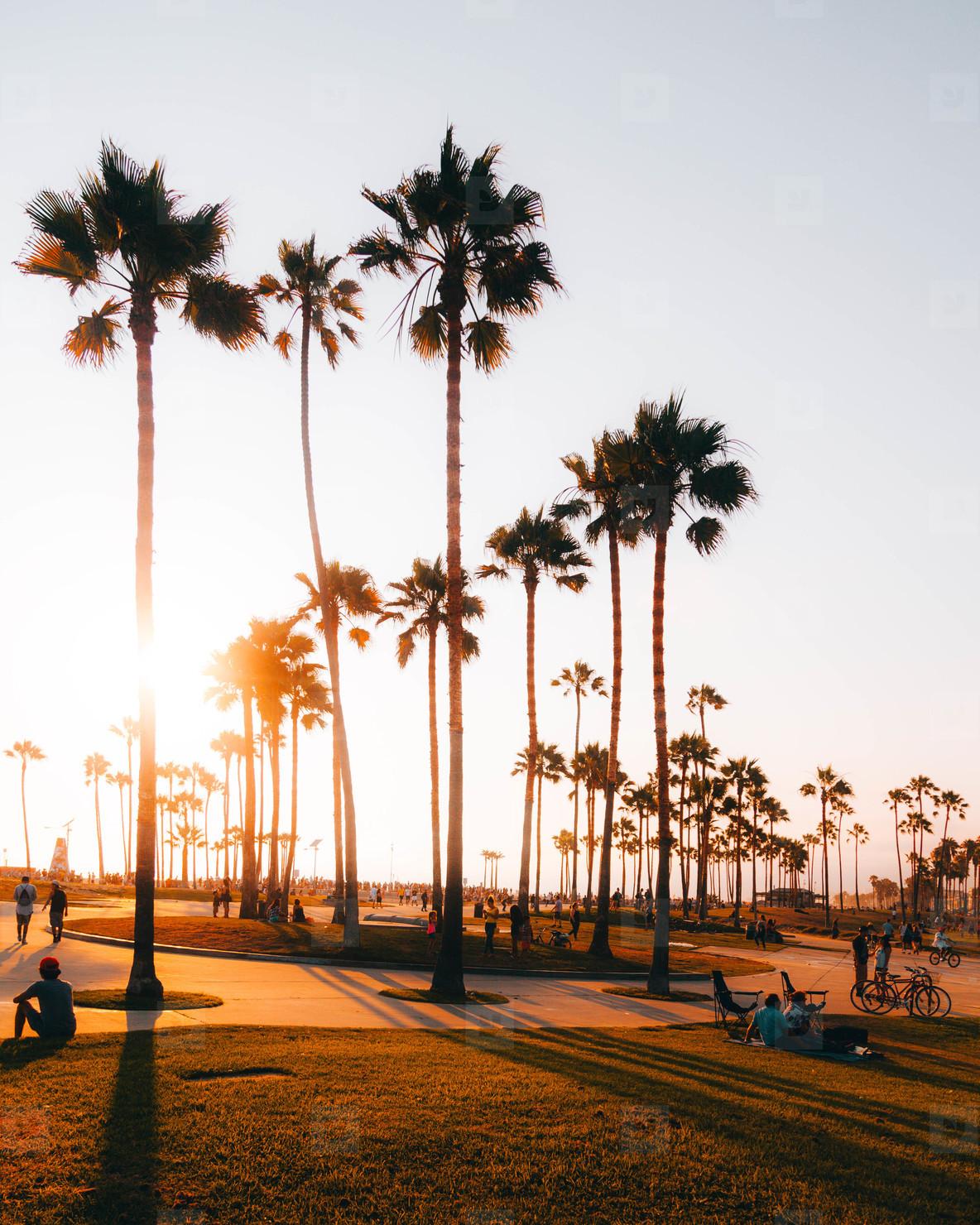 Venice Beach Sunsets