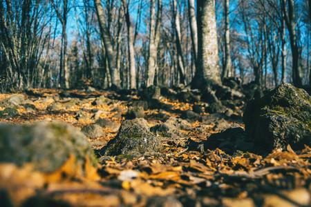 Autumnal forest taken at ground level