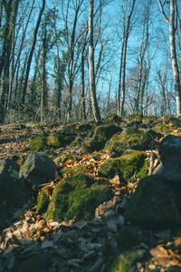 Mossy rocks on the ground