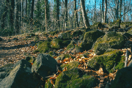 Mossy rocks and autumn leaves on the ground