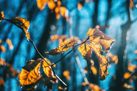 Close up of some autumn leaves on a branch