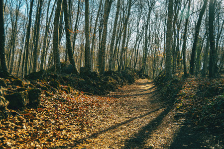 A footpath full of fallen leaves