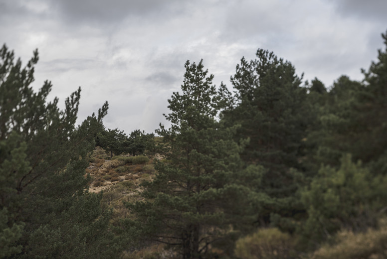 Remote landscape with pine trees on hillside