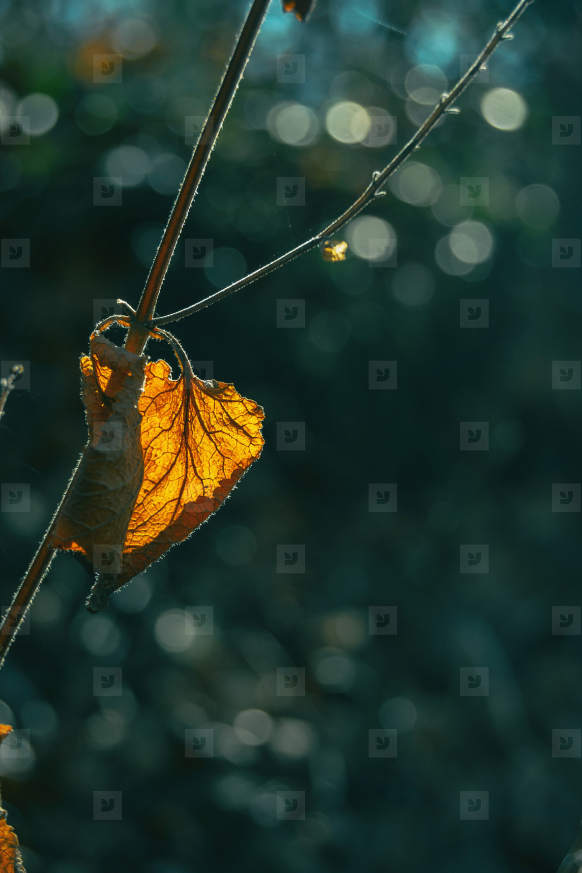 Close up of an autumnal dry leaf