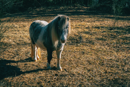 A pony in the forest