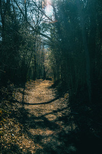 A path deep in the forest