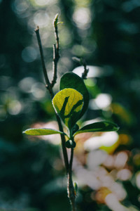 Close up of three small green leaves
