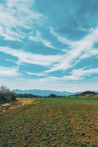 A vertical shot of a sunny rural landscape