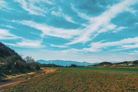 Landscape of sunny fields