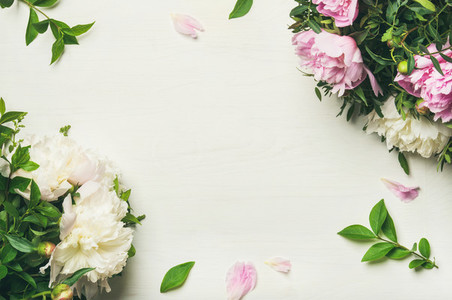 Flat lay of peony flowers over white background  copy space