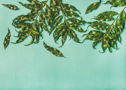 Tropical tree green leaves over pastel green background copy space