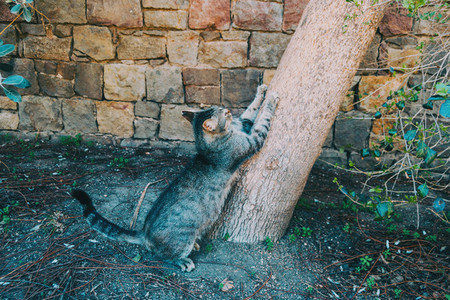 Close up of a cat scratching a tree